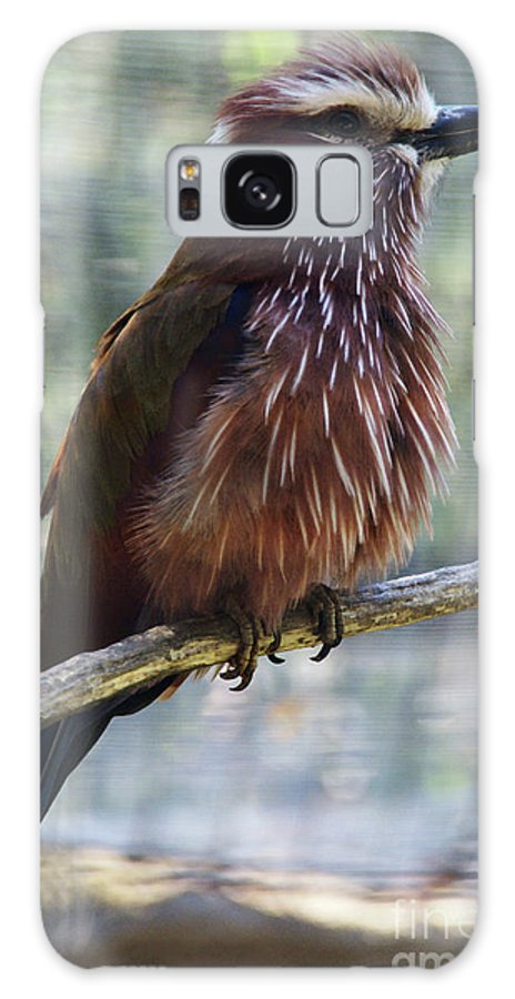 Bird Galaxy S8 Case featuring the photograph Perched - 1 by Linda Shafer