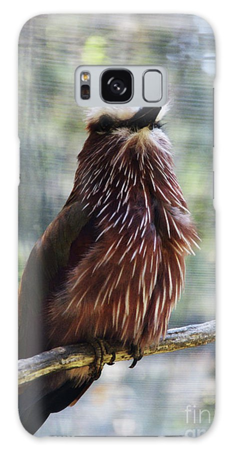 Bird Galaxy S8 Case featuring the photograph Perched - 2 by Linda Shafer
