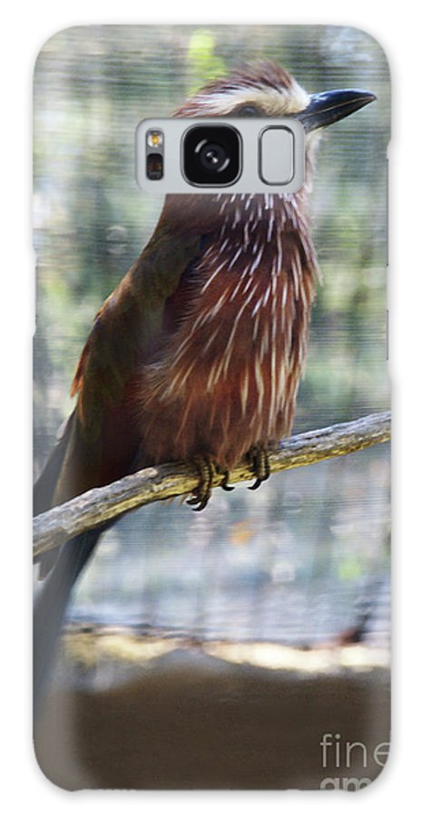 Bird Galaxy S8 Case featuring the photograph Perched - 3 by Linda Shafer
