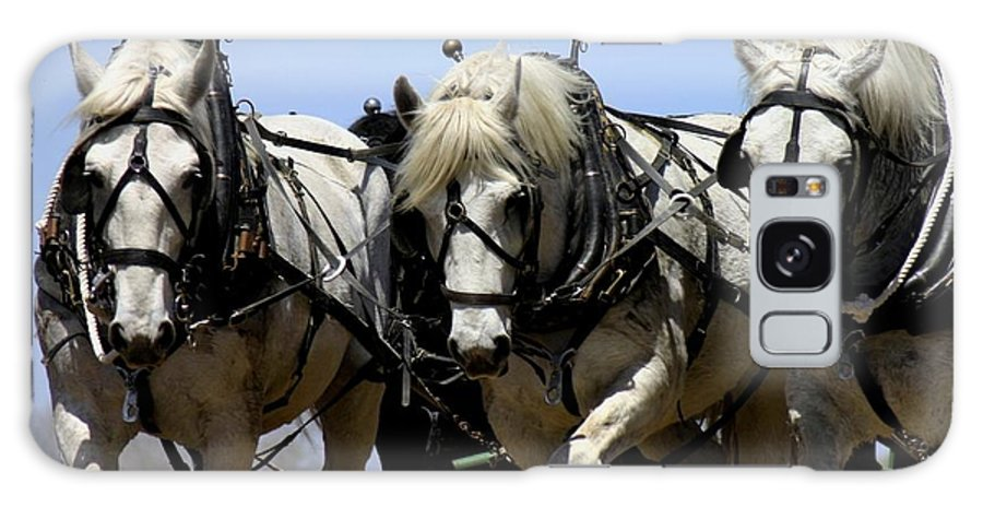 Betsy Lamere Galaxy S8 Case featuring the photograph Percherons by Betsy LaMere
