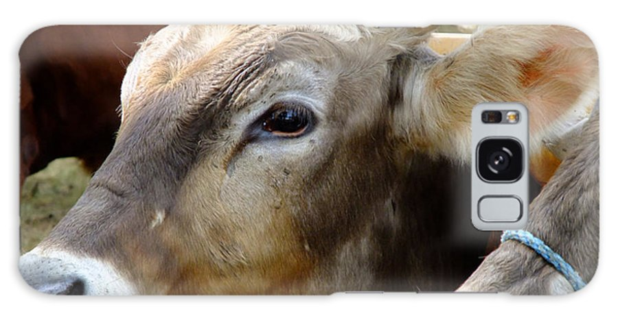 Animals Galaxy S8 Case featuring the photograph Performance Anxiety by RC DeWinter