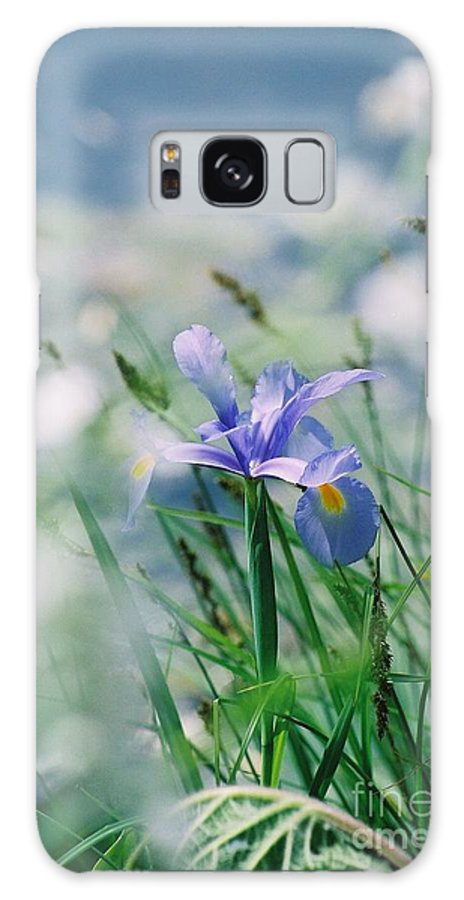 Periwinkle Galaxy Case featuring the photograph Periwinkle Iris by Nadine Rippelmeyer
