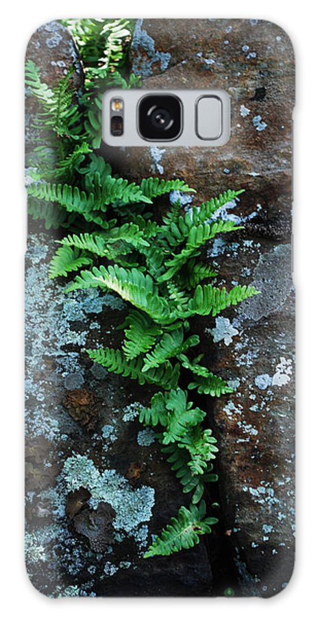 Fern Growing In Rock Galaxy S8 Case featuring the photograph Perseverance by Patricia Motley