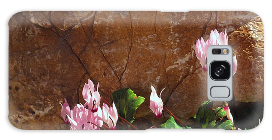 Israel Galaxy S8 Case featuring the photograph Persian Cyclamen by Thomas R Fletcher