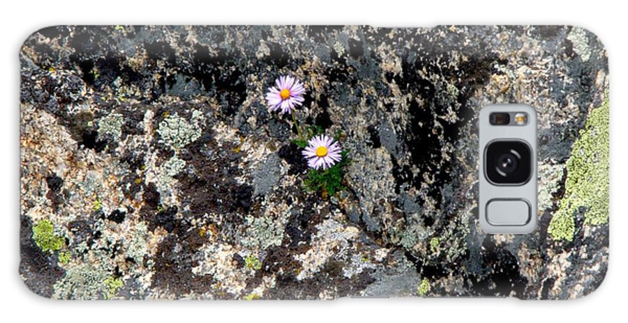 Flowers Lichen Rocks Colorado Mountains Colorful Simple Zen Galaxy S8 Case featuring the photograph Persistence by George Tuffy