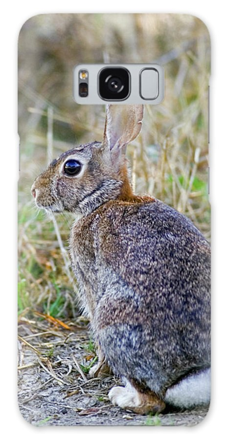 Bunny Galaxy S8 Case featuring the photograph Peter Cottontail by Randall Ingalls