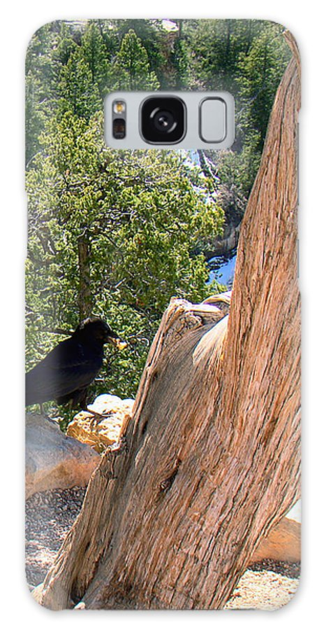 Grand Canyon Galaxy S8 Case featuring the photograph Petrified Raven At Grand Canyon by Merja Waters