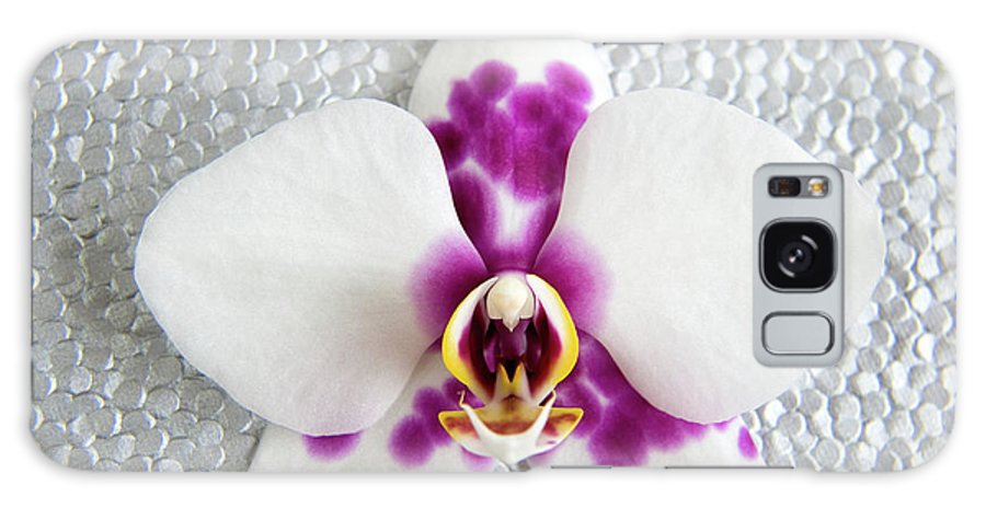 Nature Galaxy S8 Case featuring the photograph Phalaenopsis Yu Pin Panda by Julia Hiebaum