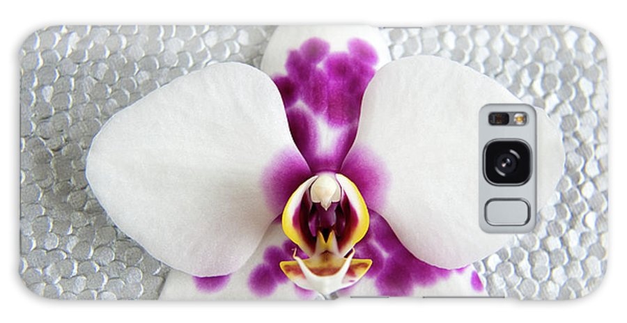 Nature Galaxy Case featuring the photograph Phalaenopsis Yu Pin Panda by Julia Hiebaum