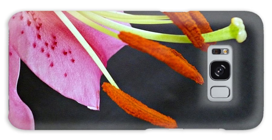 Blossom Galaxy Case featuring the photograph Phallic Blossom by Jacqueline Milner