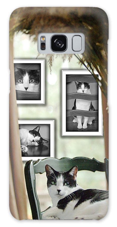 Pet Galaxy S8 Case featuring the photograph Phat Cat by Jill Reger