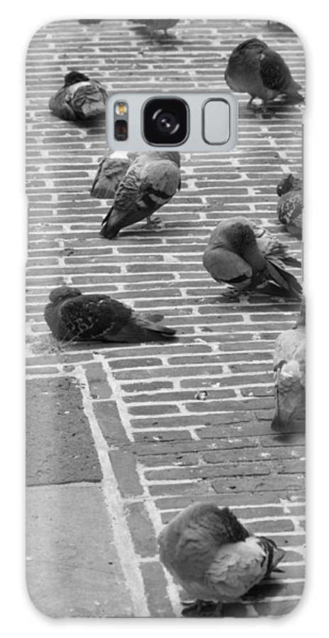 Birds Galaxy S8 Case featuring the photograph Pigeons Of Amsterdam by Noah Cole