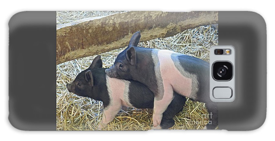 Piggyback; Piglets Galaxy S8 Case featuring the photograph Piggyback by Ann Horn