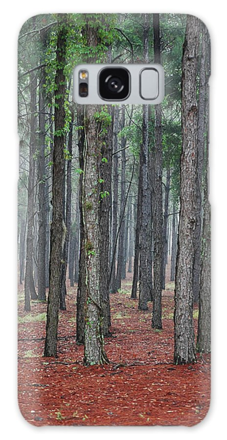 Pine Trees Galaxy S8 Case featuring the photograph Pine Trees by Robert Meanor