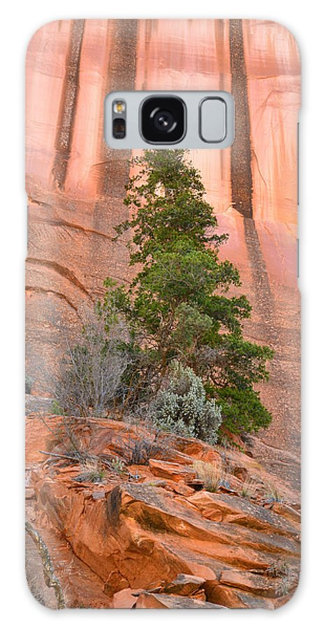 Grand Staircase Escalante National Monument Galaxy S8 Case featuring the photograph Pine Varnish by Ray Mathis