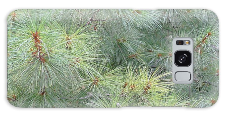 Pines Galaxy Case featuring the photograph Pines by Rhonda Barrett