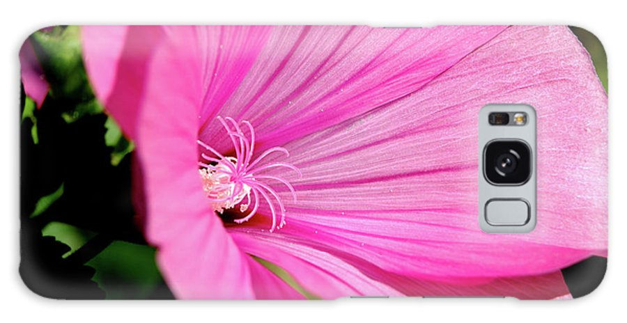 Flower Galaxy S8 Case featuring the photograph Pink Blossom by Thomas R Fletcher
