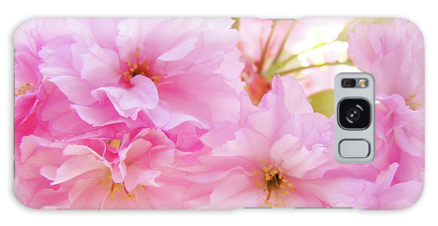 Blossom Galaxy S8 Case featuring the photograph Pink Blossoms Art Prints Canvas Spring Tree Blossoms Baslee Troutman by Baslee Troutman