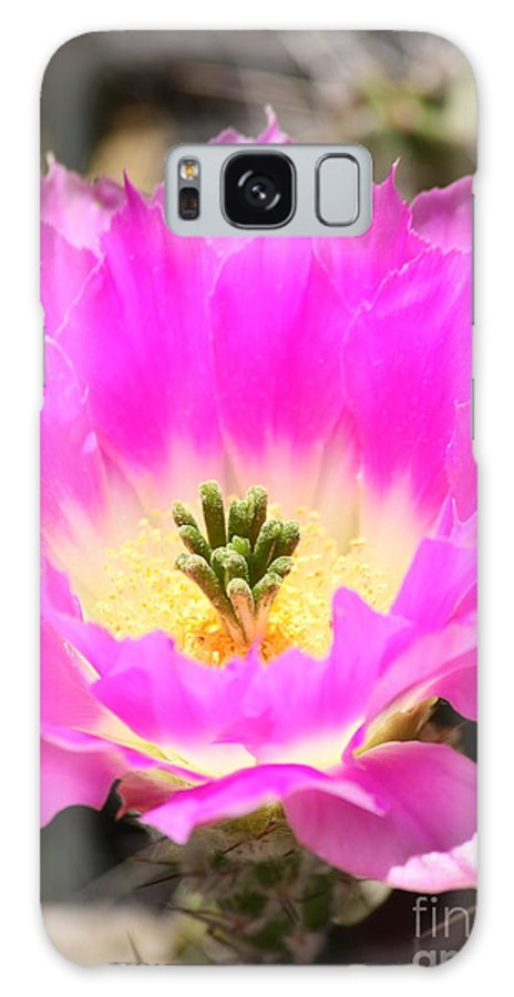 Pink Flower Galaxy S8 Case featuring the photograph Pink Cactus Flower by Carol Groenen