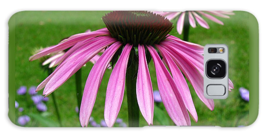 Daisies Galaxy S8 Case featuring the photograph Pink Cone Flowers by Donna Brown