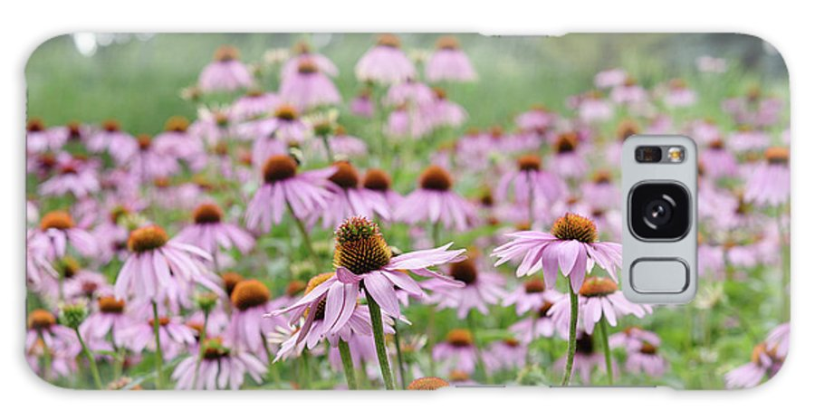 Purple Galaxy S8 Case featuring the photograph Pink Coneflowers by Yoko Takei Do