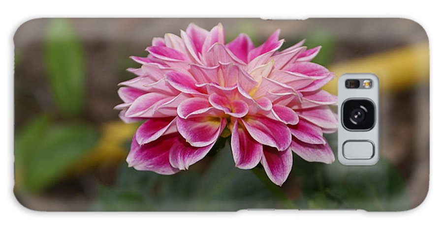 Flower Galaxy S8 Case featuring the photograph Pink Dahlia Two by Debbie May