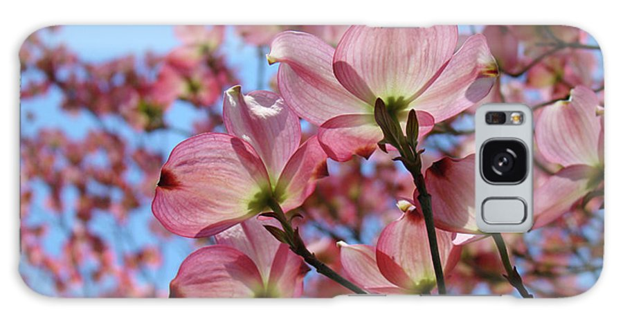Dogwood Galaxy S8 Case featuring the photograph Pink Dogwood Flowers Landscape 11 Blue Sky Botanical Artwork Baslee Troutman by Baslee Troutman