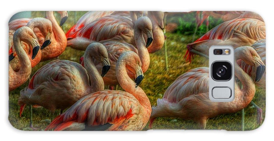 Pink Flamingos Galaxy S8 Case featuring the photograph Pink Flamingos by Saija Lehtonen