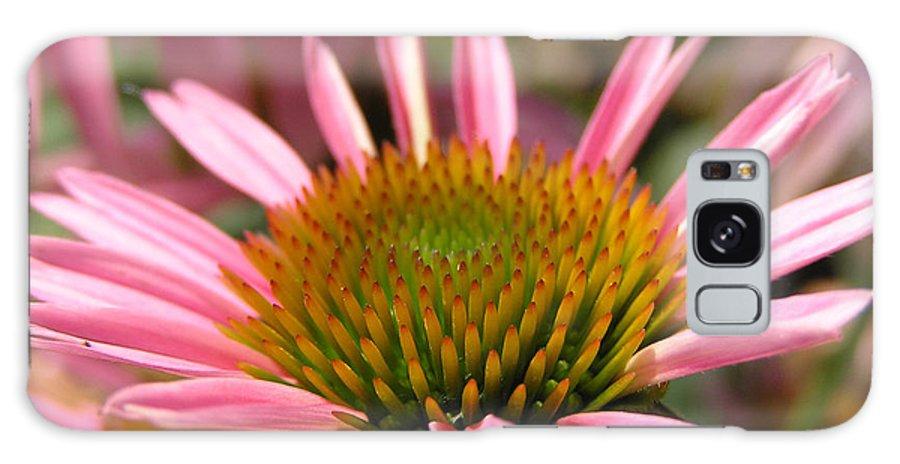 Flower Pink Macro Charleston Sc Dustin Ryan Galaxy S8 Case featuring the photograph Pink Flower by Dustin K Ryan