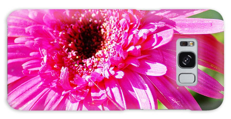 Pink Galaxy S8 Case featuring the photograph Pink Gerber by Donna Bentley