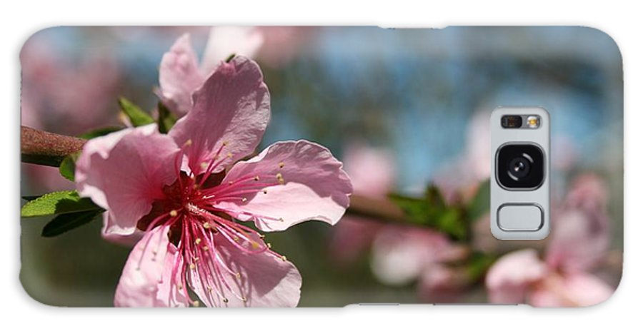 Close Up Galaxy Case featuring the photograph Pink Harvest by Joshua Sunday