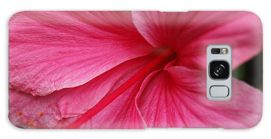 Pink Galaxy S8 Case featuring the photograph Pink Hibiscus by Kathy Schumann