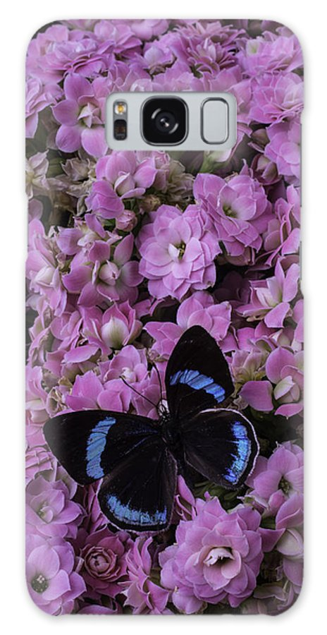Black Galaxy S8 Case featuring the photograph Pink Kalanchoe And Black Butterfly by Garry Gay