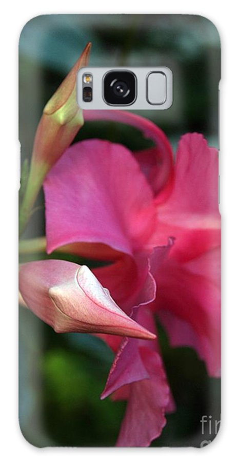 Flower Galaxy Case featuring the photograph Pink Mandevilla Bud And Flower by Anna Lisa Yoder