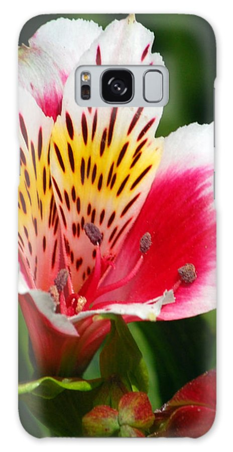Peruvian Galaxy Case featuring the photograph Pink Peruvian Lily 1 by Amy Fose