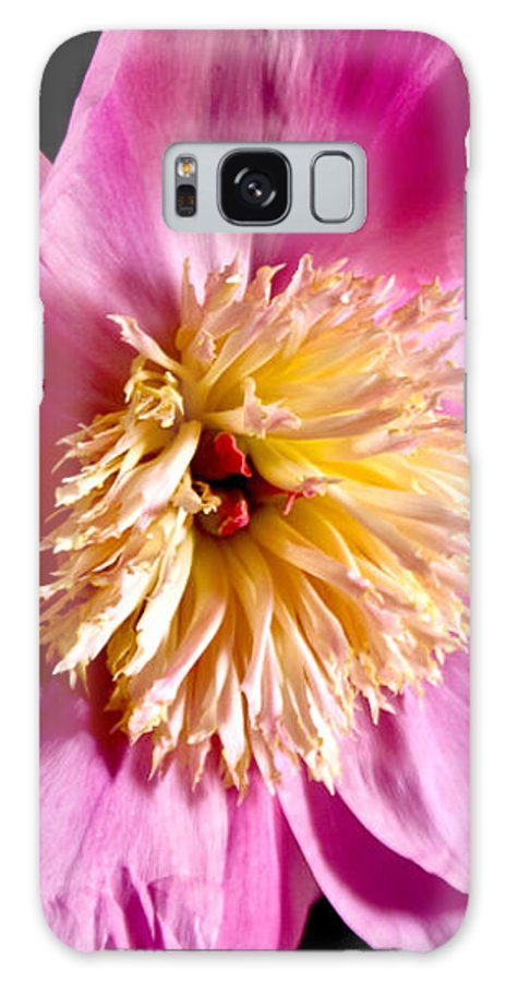 Flowers Galaxy S8 Case featuring the photograph Pink Petals by Robin Lynne Schwind