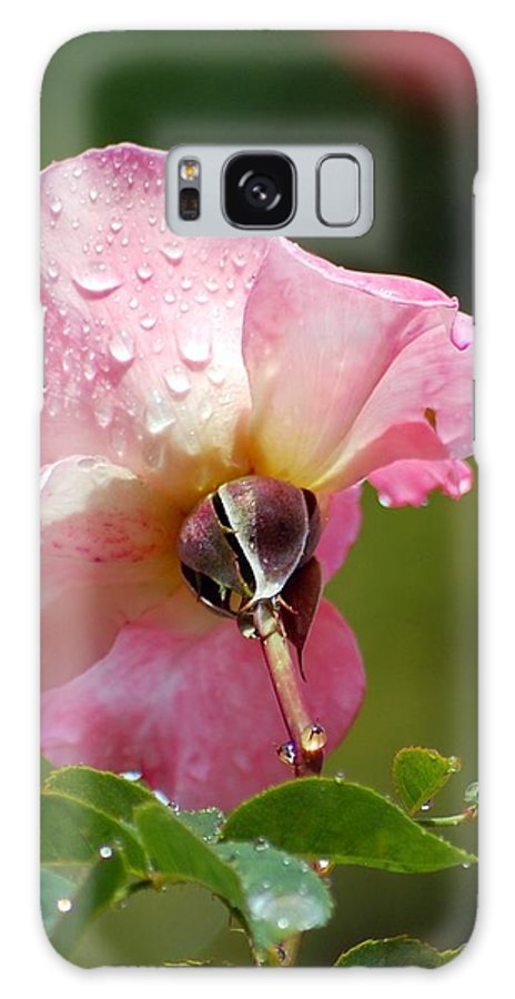 Rose Galaxy S8 Case featuring the photograph Pink Rose In The Rain 2 by Amy Fose