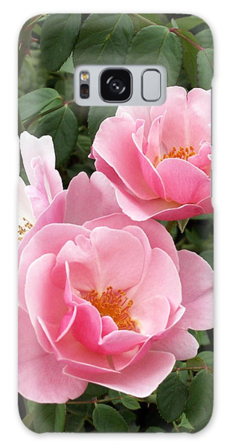 Roses Galaxy Case featuring the photograph Pink Roses 1 by Amy Fose