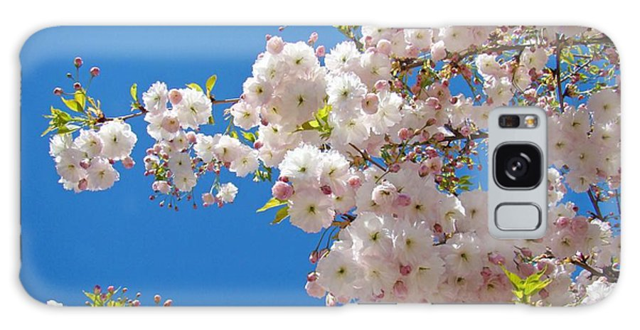 �blossoms Artwork� Galaxy S8 Case featuring the photograph Pink Tree Blossoms Art Prints 55 Spring Flowers Blue Sky Landscape by Baslee Troutman