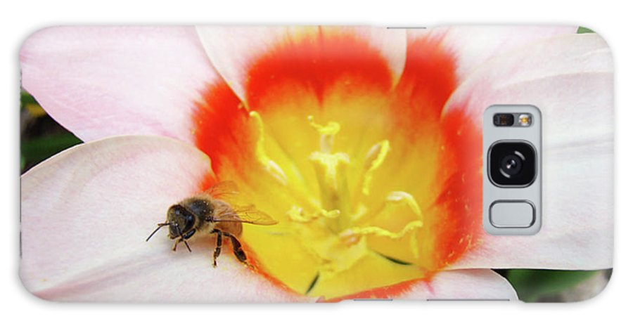 Tulip Galaxy S8 Case featuring the photograph Pink Tulip Flower Orange Art Prints Honey Bee Baslee Troutman by Baslee Troutman