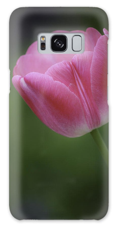 Tulip Galaxy S8 Case featuring the photograph Pink Tulip by Teresa Mucha