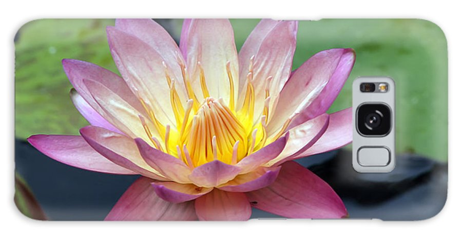 Wildflower Galaxy Case featuring the photograph Pink Water Lily by Teresa Zieba
