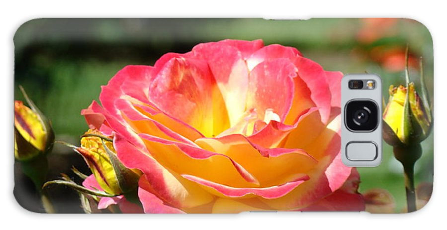 Rose Galaxy S8 Case featuring the photograph Pink Yellow Roses 3 Summer Rose Garden Giclee Art Prints Baslee Troutman by Baslee Troutman