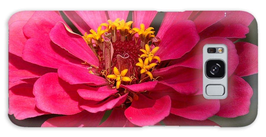Zinnia Galaxy S8 Case featuring the photograph Pink Zinnia by Racquel Morgan