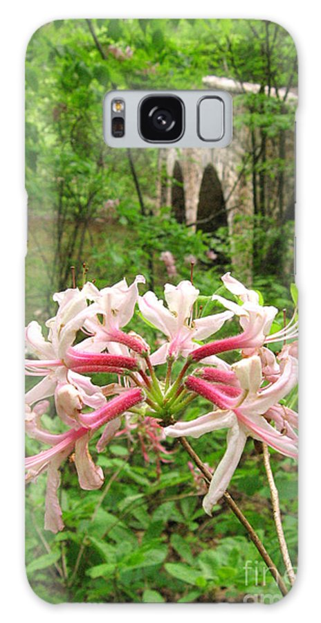Pennsylvania Galaxy S8 Case featuring the photograph Pinxterbloom Azalea At Bowmans Hill by Anna Lisa Yoder