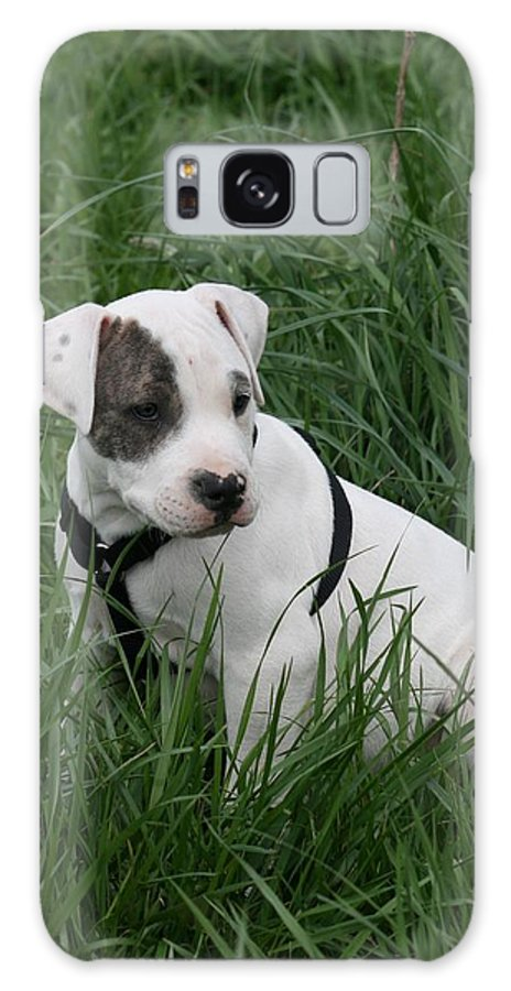 Pit Galaxy S8 Case featuring the photograph Pit Bull Puppy 5 White With Patch by David Dunham