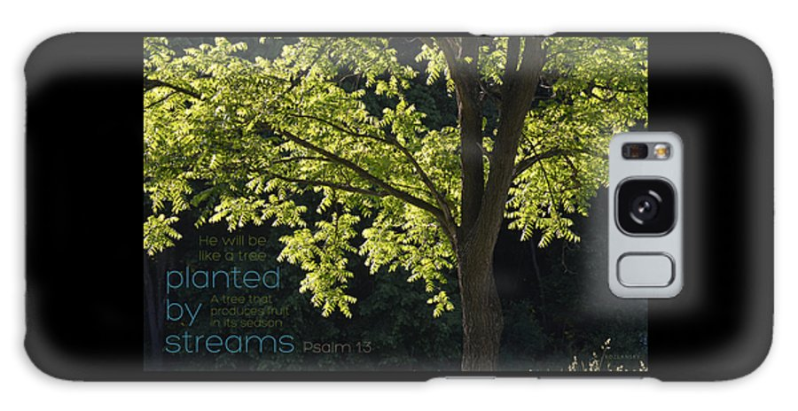 Tree Galaxy S8 Case featuring the photograph Planted By Streams by Jennifer Kozlansky