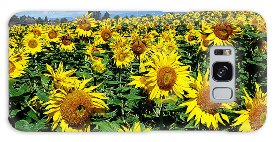 Sunflowers Galaxy Case featuring the photograph Pleasant Warmth by Jeff Barrett