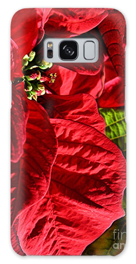 Nature Galaxy S8 Case featuring the photograph Poinsettias - Flaming Reds by Lucyna A M Green