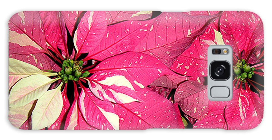 Nature Galaxy S8 Case featuring the photograph Poinsettias - Red And White Speckled by Lucyna A M Green